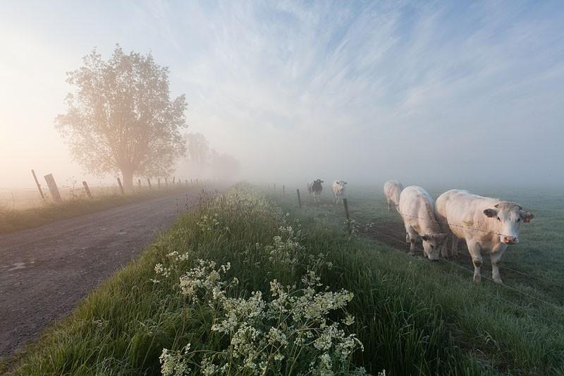 Bart Heirweg Landschap Vzw